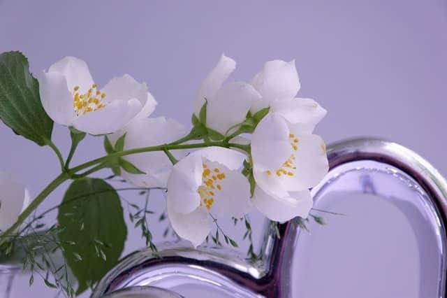 Bienfaits Tisane de jasmin