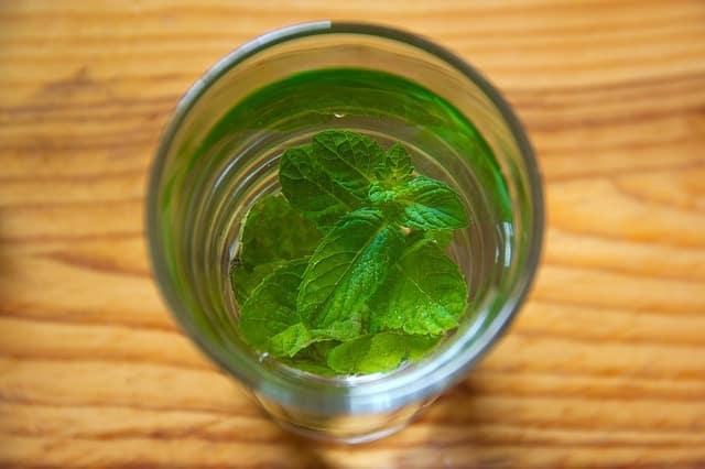 recette de thé à la menthe
