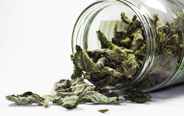 Ces thés ne sont pas toxiques (pas de pesticides et autres)
