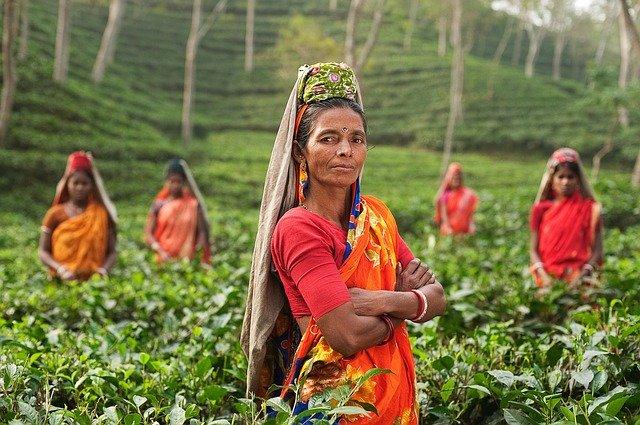 Les célèbres thés de l'Inde (et leurs vertus)