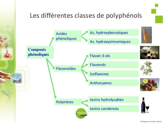 Les Polyphénols