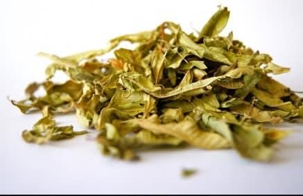 Moringa Oleifera : Les Bienfaits Secrets de cette Plante (selon la science)