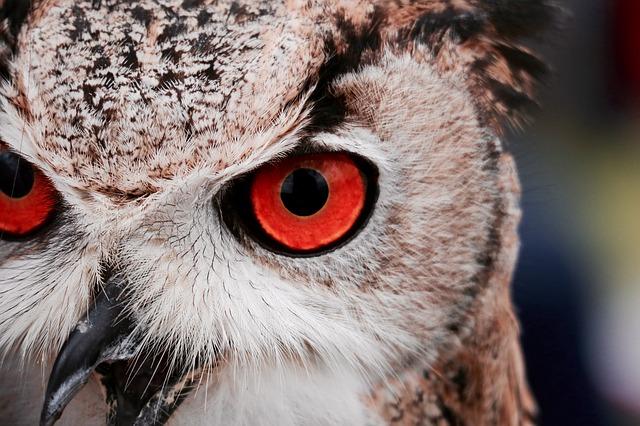 Le CBD rend-il vos yeux rouges ? (grillé ?)
