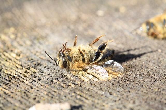 Pesticides dans le Thé : Voici une Vision Claire et Impartiale