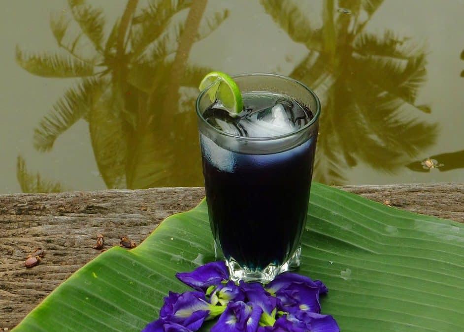 Qu'est-ce que le Thé à la Fleur de Pois Papillon ? (bienfaits, goût, couleur)